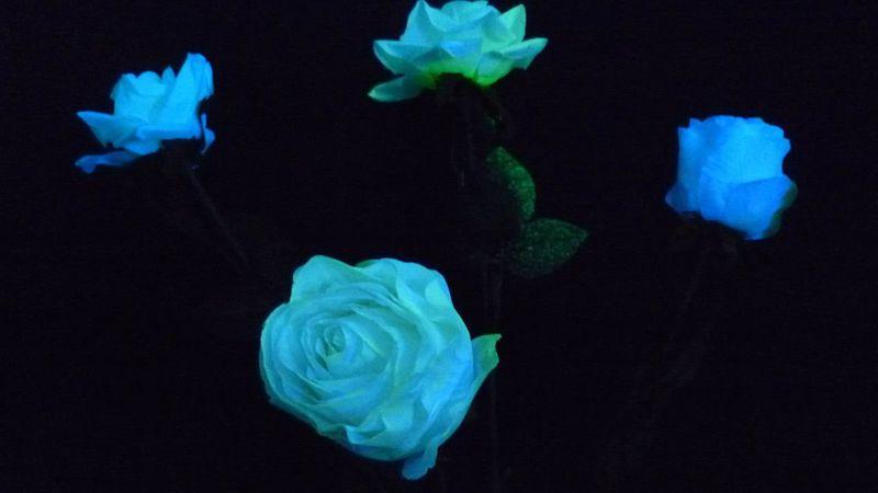 Свечение цветов