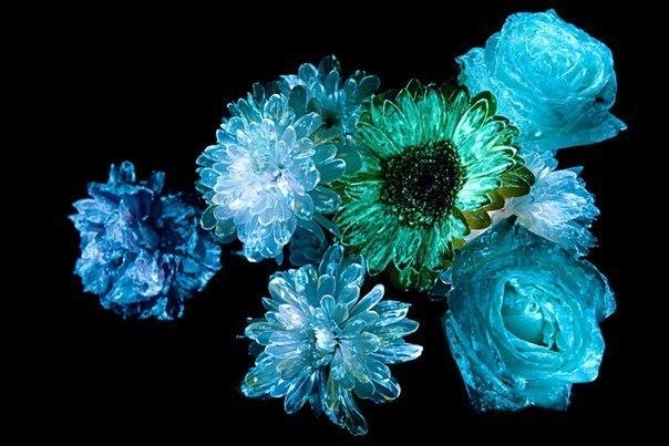 Где купить в новосибирске светящиеся цветы, цветок черные